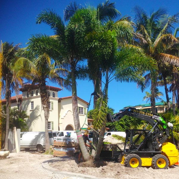 Sarasota Residential Landscaping Design and Tree Installation